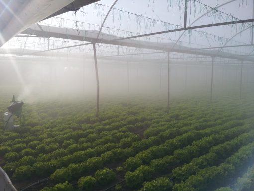 greenhouse application